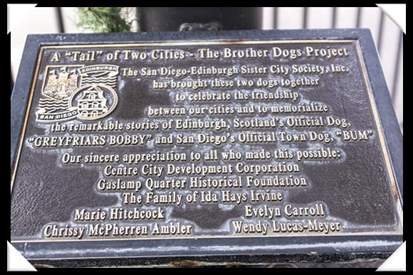 The Brother Dogs Project, San Diego California