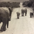 Why writing a book is like giving birth to an elephant. Part 1 – The First Dates